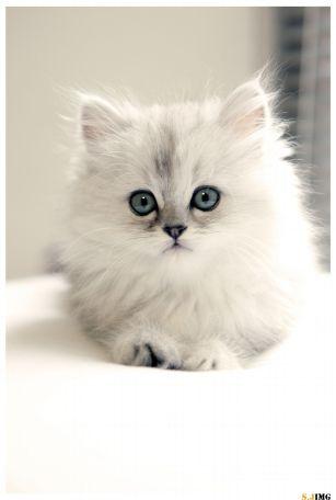 kitty2.jpg