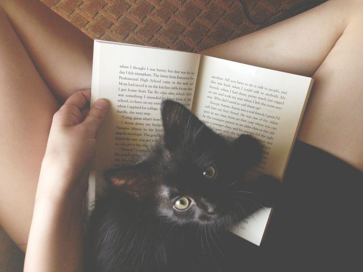 kitty27.jpg