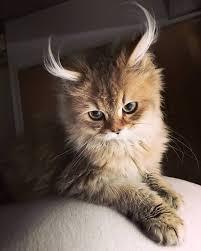 kitty60