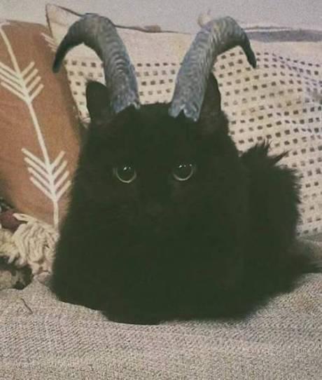 kitty63