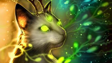 kitty65