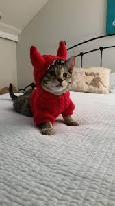 kitty68