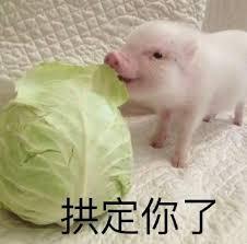piggy1.jpg