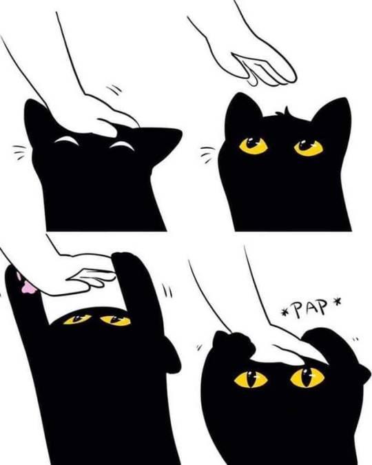 kitty117